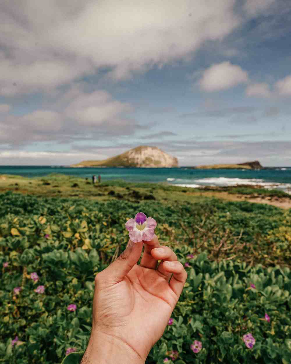 hand-holding-flower-in-hawaii-mountains-ocean-beautiful